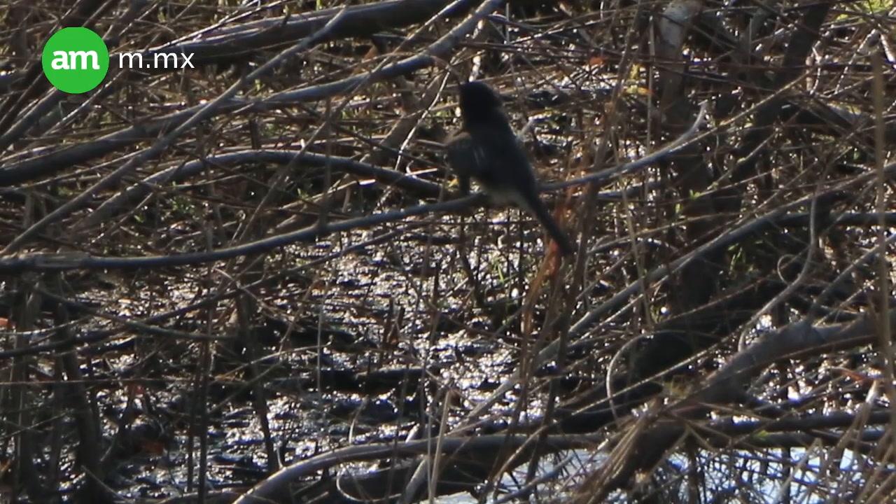 Avistamiento de aves en el Parque Metropolitano