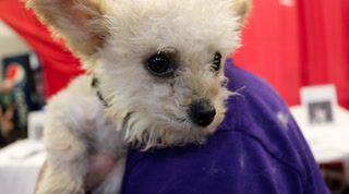 52 pups found forever homes after the Best in Show event