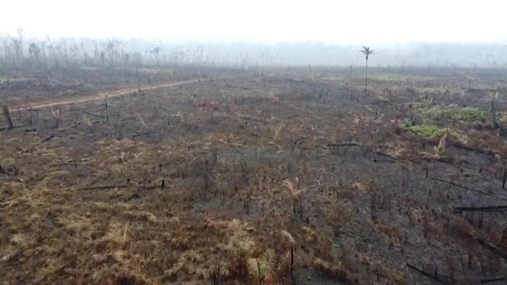 Amazon deforestation hits new June record