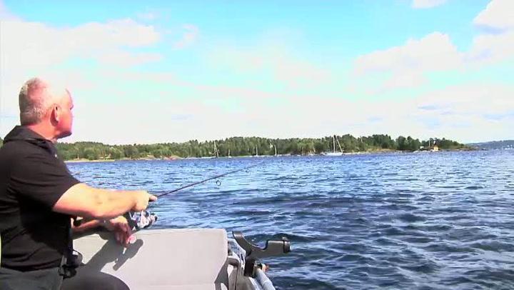 Hvordan fiske makrell