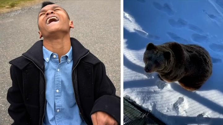 1. Ham Daosai 2. Bjørn i snøen