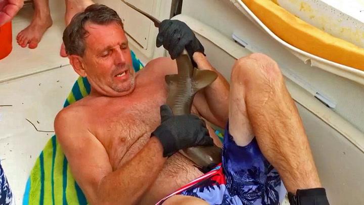 Haien biter seg fast i mannens mage - nekter å slippe