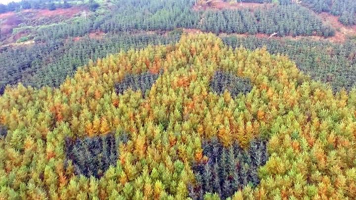 Høsten avslørte skogens hemmelighet