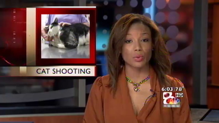 Arrest Made in the Shooting of Versailles Cats