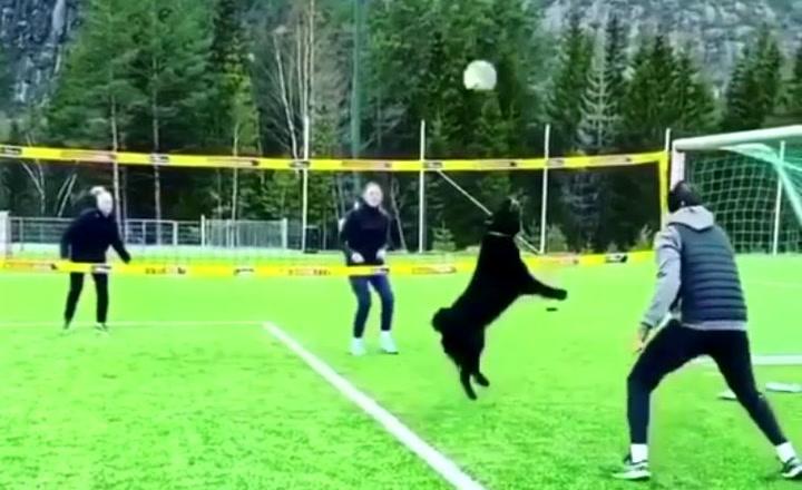 Este perro juega al voleibol mejor que tú
