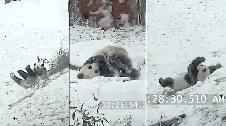 Vinterens første snø: Da Mao elsker det!