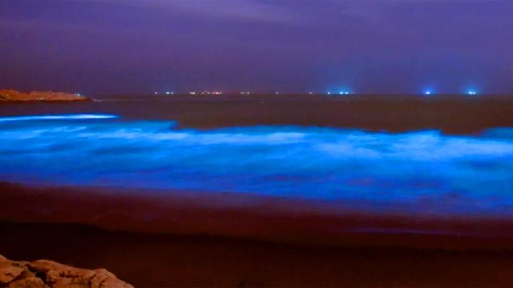Plankton gir havet magisk blåfarge
