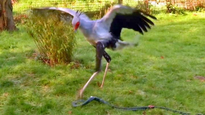 Er dette verdens råeste fugl?