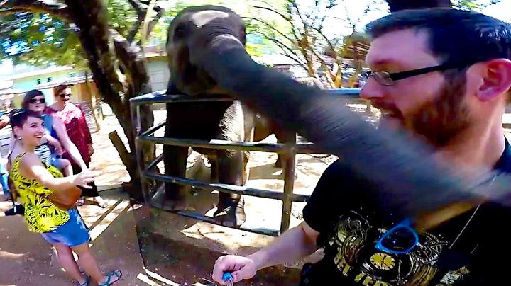 Nærgående turist fikk snabel-smekk over snuta