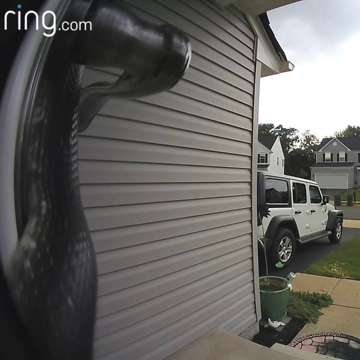 Homeowner Gets A Shock After New Doorbell Camera Alerts Her To A Slithery Intruder