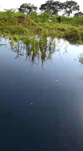 VIDEOS: Crece la preocupación por la gran mortandad de peces en el río Paraná