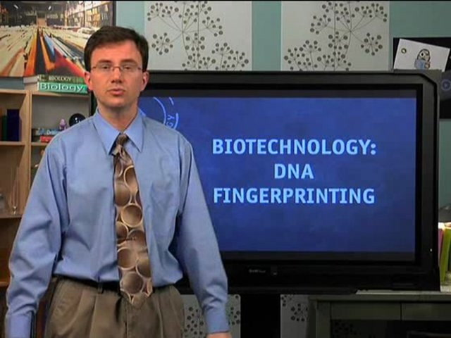 Biotech: DNA Fingerprinting