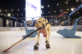 Benny the Ice Skating Dog