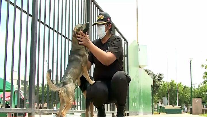 Perros callejeros y una agente de serenazgo logran capturar a delincuentes en Santa Anita