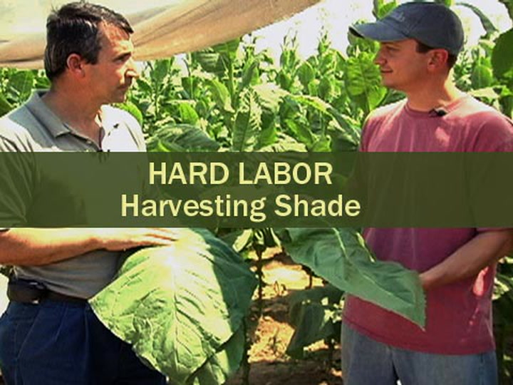 Hard Labor - Harvesting Shade