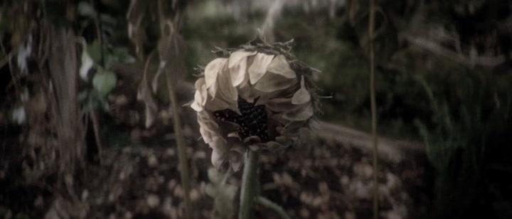 Transcendence Viral Video