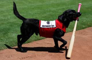 Finn The Bat Dog's Daily Routine – Video