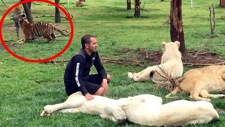 Dyrepark-eier aner ikke hvor heldig han er