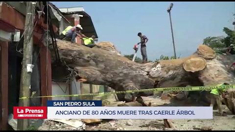 Anciano de 80 años muere tras caerle árbol en San Pedro Sula