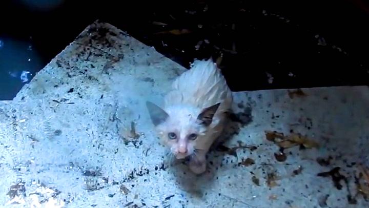 I siste liten reddes kattungene fra drukningsdøden
