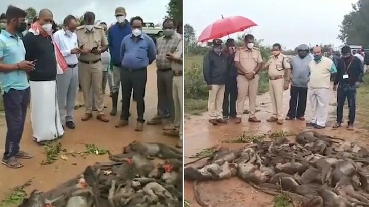 More than 50 monkeys beaten, poisoned and stuffed inside sacks in India