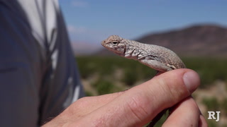 The ban on commercial reptiles