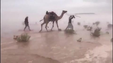 ¿Espejismo? camellos surcan el desierto convertido en un lago