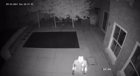 Ladrones roban en la casa de jugador del Chelsea; se llevaron la caja fuerte