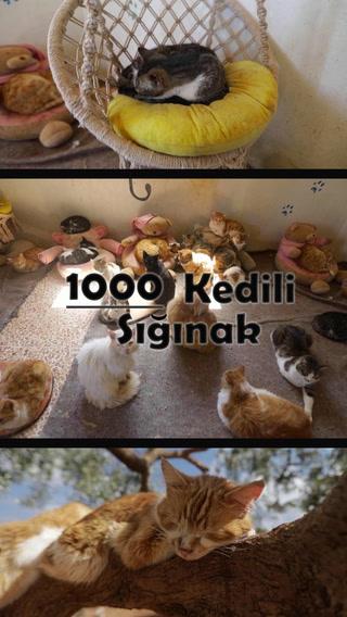 1000 kedili sığınak