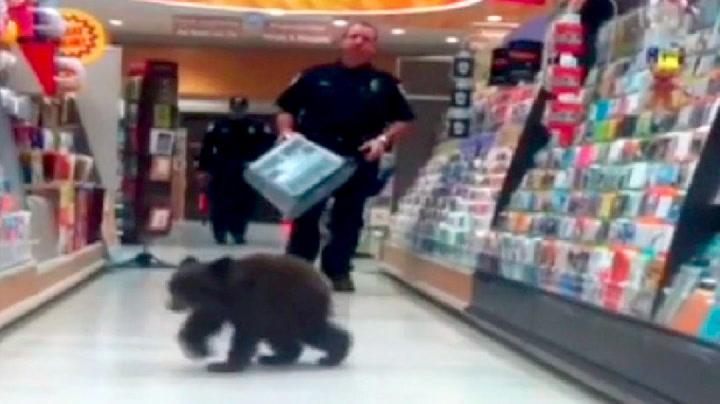Se bjørnungen på handletur