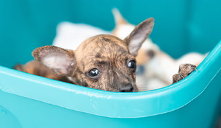 Animal Foundation Helps Unreclaimed Pets After July 4th – Video