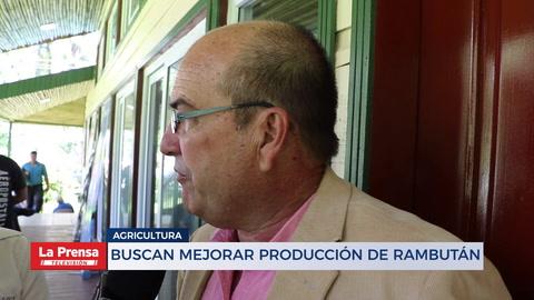 Buscan mejorar producción de Rambután