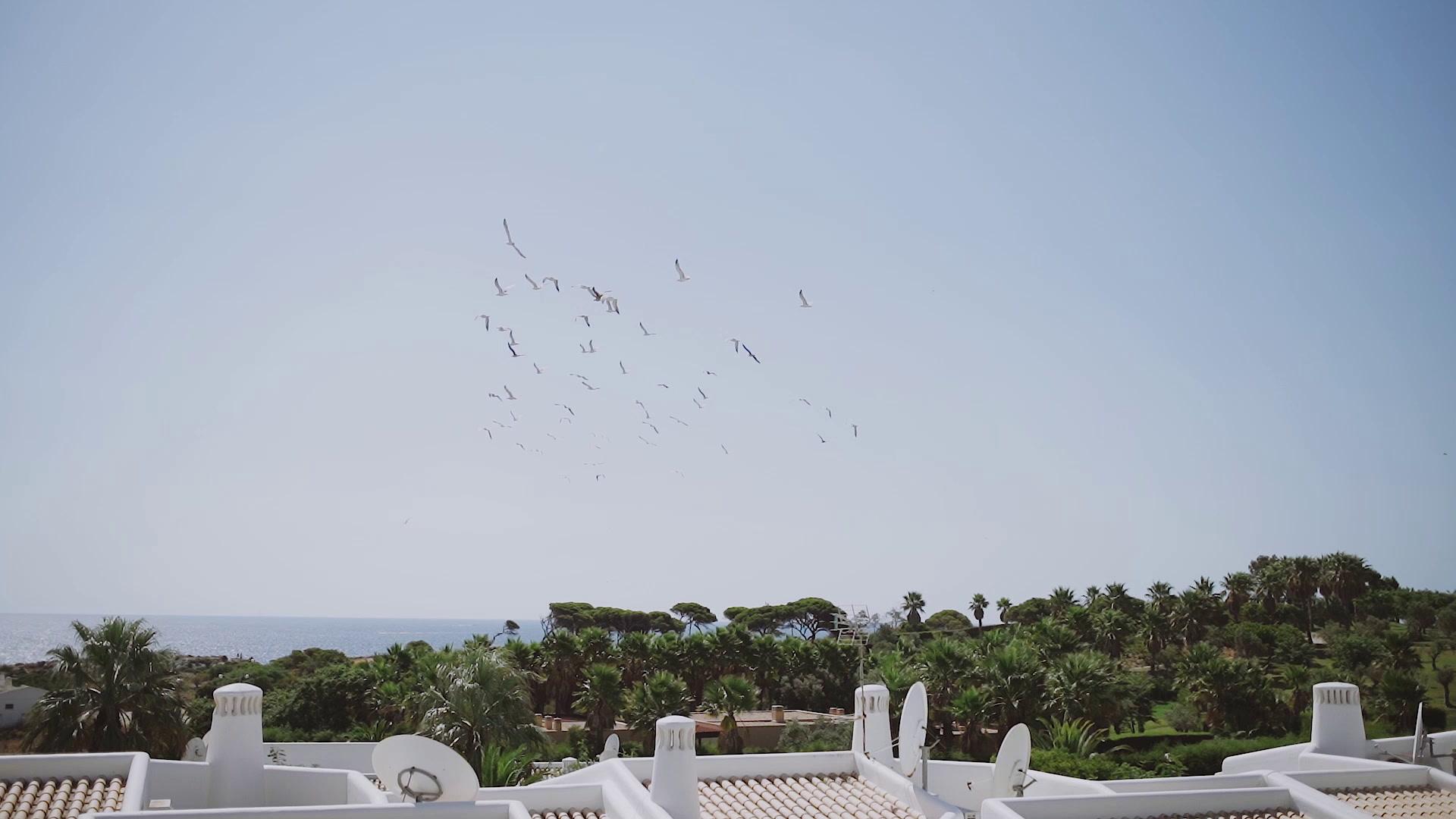Denise  +  Joe  | Albufeira, Portugal | monte das oliveiras