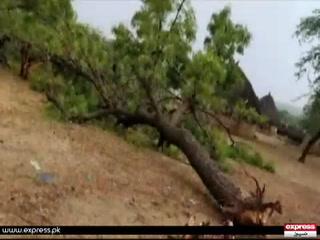 سندھ کے ضلع تھرپارکر میں بارش اور آسمانی بجلی نے قیامت ڈھا دی