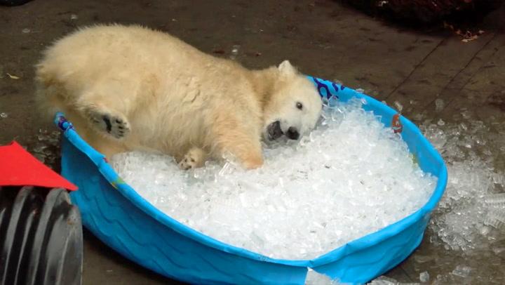 Et isbad har aldri vært søtere