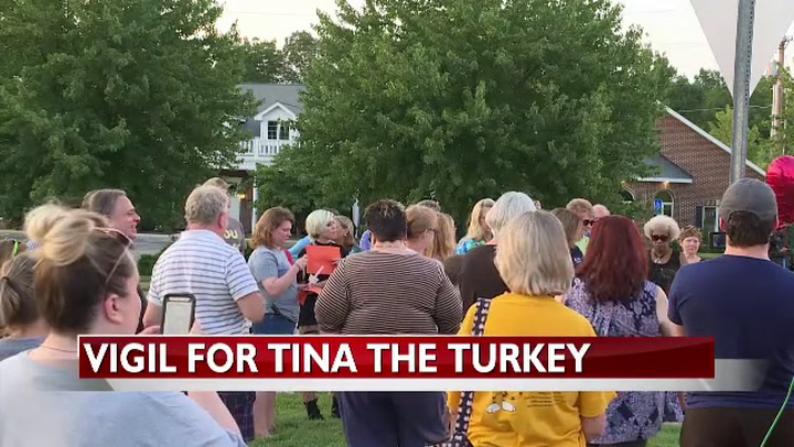 Tina the Turkey dead after getting hit by vehicle in south Columbia part 2