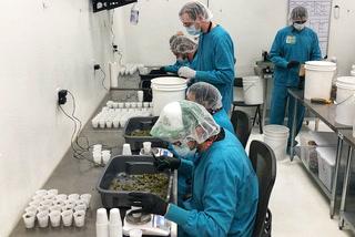 Marijuana industry  growing like a weed