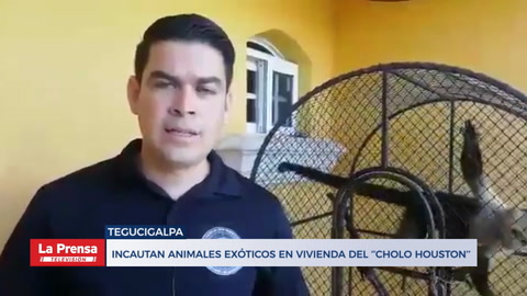 Incautan animales exóticos en vivienda del ''Cholo Houston''