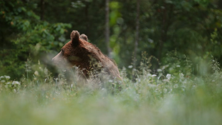 What to do if you spot a bear in your neighborhood