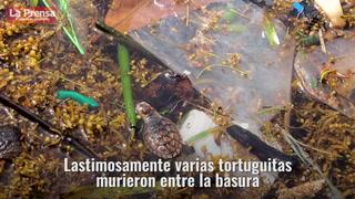 La contaminación en Roatán
