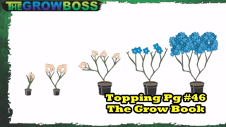 Marijuana Garden Rescue Top Lollipop Trim Up A Marijuana Plant With The Grow Boss