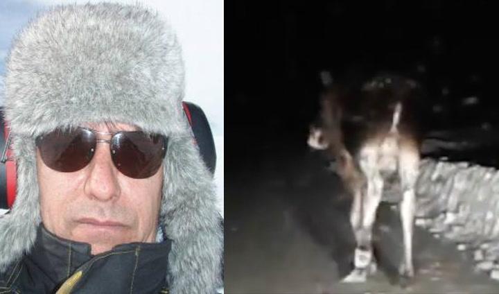 Sint svenske: – Flytt deg, elg-jævel!
