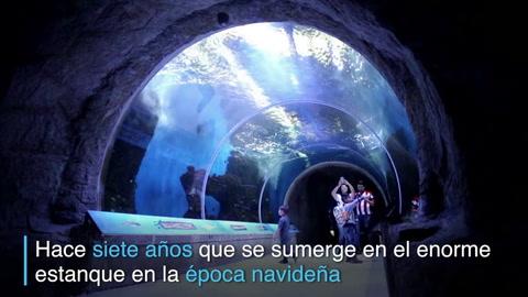 Santa Claus acuático, la estrella de un acuario en México