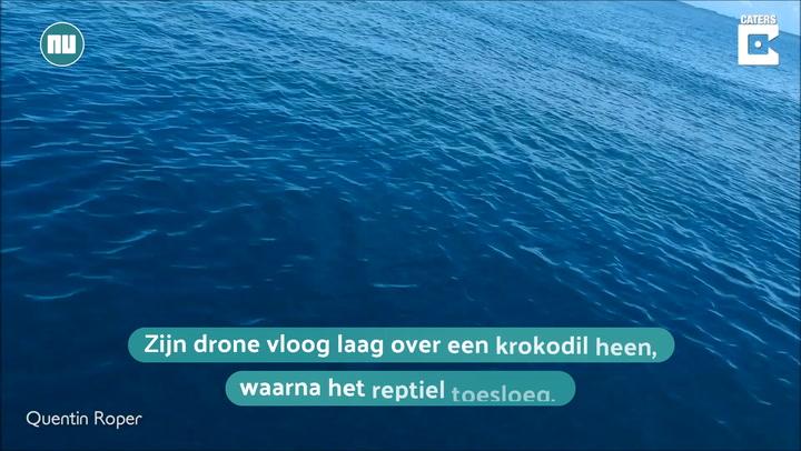 Kijken: Krokodil probeert drone te grijpen