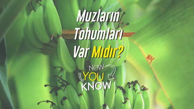 Now You Know - Muzların tohumları var mıdır?