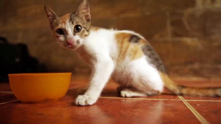 Skjelvende kattunge lar seg ikke stanse