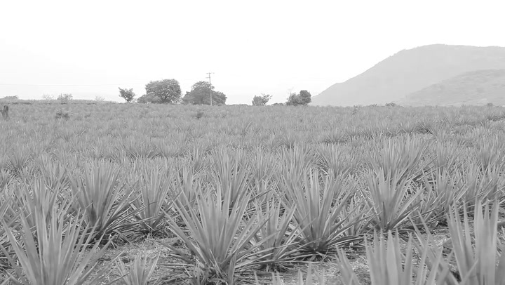 Preview image of Clase Azul Tequila Reposado video