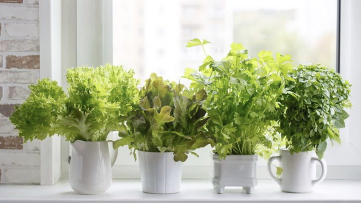 How Does Your Vegetable Garden Grow? Indoors