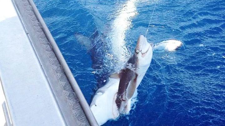 Filmet sjeldent haiangrep fra båten