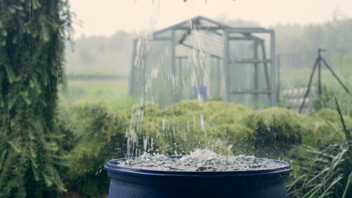 What is rainwater harvesting and is it legal where you live?